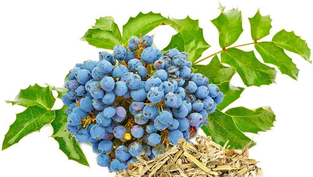 oregon_grape.jpg